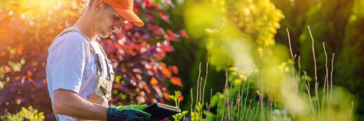 prijzen tuinonderhoud